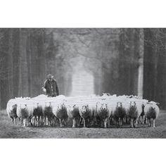 Alu Art | Natuur en Stad | Schapen met herder
