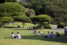 Cherry blossom season isn't the only time to roll out your picnic mat and prepare your picnic basket! Find out the top picnic spots in Tokyo. Shinjuku Gyoen, Shinjuku Tokyo, Shibuya Tokyo, Tokyo Japan, African Lily, Modern Agriculture, Rest House, Cherry Blossom Season