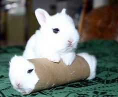 Funny Animal Pictures - View our collection of cute and funny pet videos and pics. New funny animal pictures and videos submitted daily. Cute Baby Bunnies, Funny Bunnies, Cute Baby Animals, Funny Animals, Bunny Bunny, White Bunnies, Fluffy Bunny, White Rabbits, Bunny Rabbits