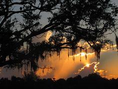 Sunrise Through The Oak ~ Stuart, Florida