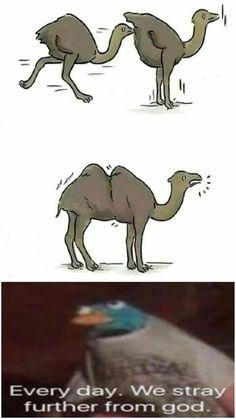 Crazy Funny Memes, Really Funny Memes, Stupid Funny Memes, Funny Relatable Memes, Haha Funny, Hilarious, Dark Humor Jokes, Cursed Images, Mood Pics