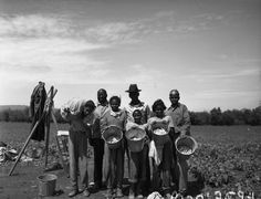 A group of African-Americans working in a bean field near Scappoose, Oregon, led by Rev. M. C. Cheek of Guilds Lake Community Church, 1947. After the war ended, many African-Americans previously employed in Portland's shipyards sought farm work. Although relatively few in number, they were segregated into their own work platoons. Some farmers refused to employ them.(OSU)