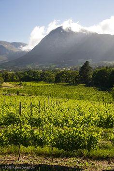 Vineyards, Franschhoek, South Africa_3619 | by womaninblack