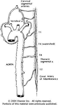 Neuroradiology Cases: Internal carotid artery Anatomy