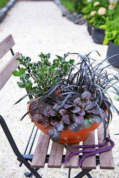 Syysistutukset ruukussa   Meillä kotona Plants, Plant, Planets