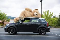 Costco is Going to Start Selling These Plush Bears. Don't Tell the Kiddos About That One. - Funny WIN Photos and Videos Giant Teddy Bear, Big Bear, Teddy Bears, Costco Bear, Bear Tumblr, Big Stuffed Animal, Stuffed Bear, Cute Cars, Bears