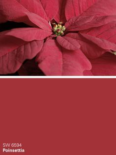 Poinsettia paint color SW 6594 by Sherwin-Williams. View interior and exterior paint colors and color palettes. Best Exterior Paint, House Paint Exterior, Exterior Paint Colors, Exterior House Colors, Red Paint Colors, Favorite Paint Colors, Paint Colors For Home, Color Red, Exterior Paint Sherwin Williams