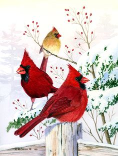 Cardinals in Winter by Maureen McCarthy ~ Christmas