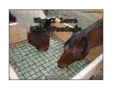 Happy Horse Healthy Planet.Slow_Feeders_Blog  Benefits of slow horse feeders!