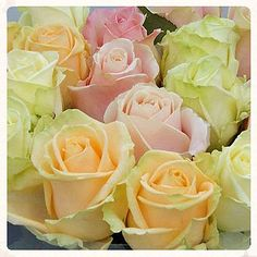 Avalanche Pastelmix - Viproses - Special roses