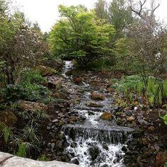 Tymczasem w Edynburgu. Lubicie spędzać czas na łonie natury? My uwielbiamy!  A na blogu nowy post o tym kiedy i dlaczego warto pomyśleć o zmianie zawodu (link w bio)  #edinburghlife #edynburg #lovemornings #nature #natura #przyroda #familything #familytime #rośliny #czasdlamnie #czasrazem #sobota #dlugiweekend #bankholidayweekend #lifeworkbalance #happymonents #happylife #szczescie #instadaily #instagood #instamood #bestoftheday #photooftheday #instalike