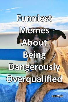 Some people really are overqualified for jobs they apply for. The rest of us can just laugh at these memes about it. Professional Resume Writing Service, Resume Writing Services, Funny Jobs, Funny Memes, Funniest Memes, Career Quotes, Career Advice, Creative Cover Letter, Career Consultant