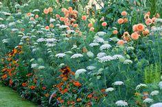 combination: Dahlia David Howard, Amni Visnaga, Toothpick Weed, Rudbeckia 'Autumn Colors', Rudbeckia 'Autumn Colours', Zinnia Profusion, summer borders