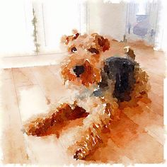 Watercolour Airedale