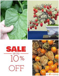 10% OFF on select products. Hurry, sale ending soon! Check out our discounted products now: https://orangetwig.com/shops/AAAibxW/campaigns/AABufU4?cb=2015012&sn=CaribbeanGarden&ch=pin&crid=AABue0H