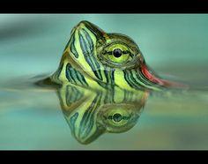 Eyefocused - --Neven Jurkovic - Pixdaus
