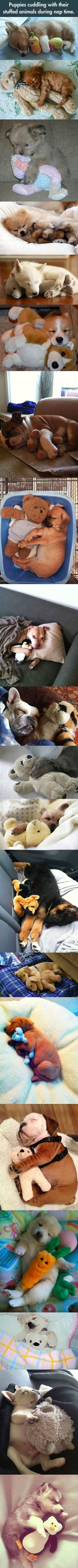 Why every puppy should have a stuffed toy to play and nap with.