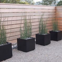 Horsetail reed planters. The only way I use this plant is in a planter, it's too invasive to use in the garden.
