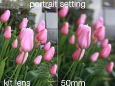 8 steps to better photos on AUTO {step 8: 50mm lens for gorgeous portraits and low light photos} - It's Always Autumn