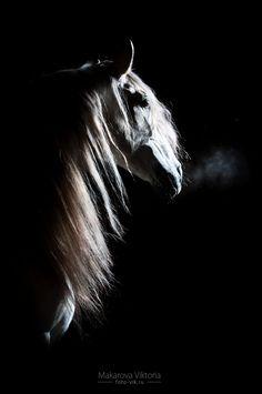 www.pegasebuzz.com | Equestrian photography : Makarova Viktoria