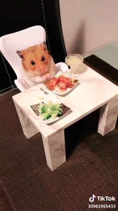 Hamster in the meal - Candice Home Cute Little Animals, Cute Funny Animals, Funny Cute, Cute Animal Videos, Cute Animal Pictures, Funny Hamsters, Cute Creatures, Pet Birds, Animals Beautiful