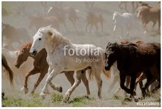 Herd of horses thundering by in dusty sagebrush. Phot is available at https://us.fotolia.com/id/111614669    copyright by Georgia Evans