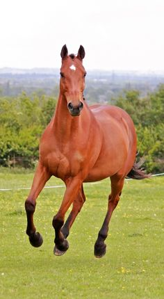 This is the most beautiful horse ever