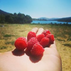 ORGANIC FARM raspberry picking + EASY walk Pinilla reservoir - Children welcome! - Sporty People (Madrid) | Meetup Raspberry, Strawberry, Organic Farming, Madrid, Hiking, Sporty, Fruit, Children, Easy