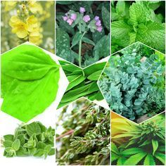 Health And Nutrition, Lunges, Cabbage, The Cure, Cancer, Healing, Herbs, Tea, Vegetables