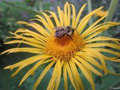Springtime In Halifax~Flower & Bee