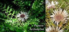 Byliny - Bylinky pro všechny Dandelion, Flowers, Plants, Dandelions, Plant, Taraxacum Officinale, Royal Icing Flowers, Flower, Florals