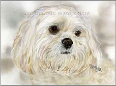 LHASA APSO Dog 15x11 Signed Giclee Watercolor by steinwatercolors, $40.00