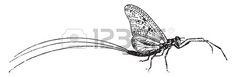Ephemeral vintage engraved illustration Natural History of Animals 1880  Stock Vector