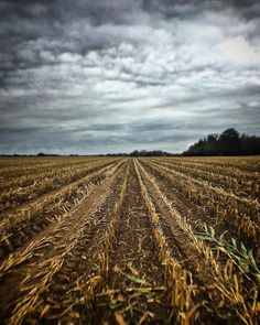 Corn-napped!!! #explore_skies #moon_skyclouds #Igerssurrey #cloudzdelight #_stop_and_stare #igworld_nature_ #exceptional_pictures #igbellus #nature_brilliance #incredible_shot #moodskyshotz #fingerprintofgod #cornfield #harvest #empty #shotoniphone #beaniedee