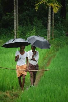 Kerala (Incredible India) Places, Cities, Beaches, foods, Festival, Culture, Life, Wildlife & Beauty