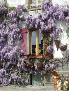 Rochefort-en-terre Glycines - Ot Rochefort-en-terre.jpg