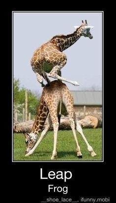 :O I. <3. GIRAFFES!!!!!!!!!