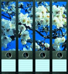 Lever Arch File Label Cherry Blossoms AJ020