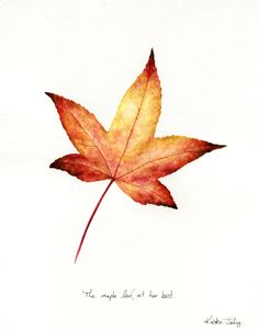 Kristen Johns: The maple leaf, at her best Watercolor Projects, Watercolor Plants, Watercolor Cards, Watercolor And Ink, Watercolor Paintings, Botanical Illustration, Illustration Art, Reference Photos For Artists, Butterfly Wallpaper Iphone