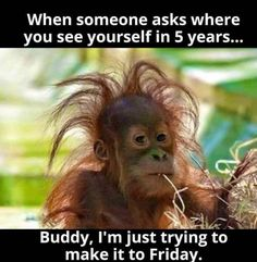 """My hairstyle today is called: """"I tried"""" funny jokes funny quotes humor funny pics fun quotes funny images fun pics jokes and fun Funny Cute, The Funny, Funny Jokes, Hilarious, Funniest Memes, Funniest Quotes Ever, Funny Stuff, Funny Animal Memes, Funny Animal Pictures"""