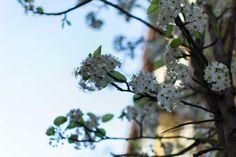 Spring Madrid Photography