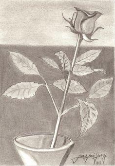 Rosa en vaso Carboncillo 300€