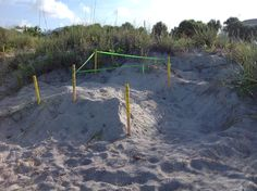 Turtles Nest on Manasota Beach Manatees, Beach Town, Sea Turtles, Sea Creatures, Dolphins, Nest, New Homes, Florida, Places