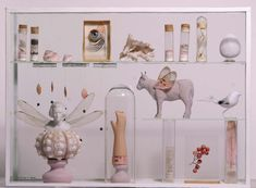 A contemporary cabinet of curiosities, by Maissa Toulet