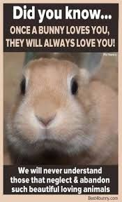 Image result for how do i know what breed my rabbit is