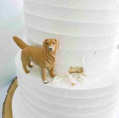 These Cakes That Feature Tiny Dogs With Icing Over Their Snouts Have Captured The Internet's Heart Other Cakes By Darci) Darci from Canmore in Alberta, Canada, is an expert at designing and baking custom cakes for weddings and various other events. Wedding Bells, Our Wedding, Dream Wedding, Culture Art, Themed Wedding Cakes, Funny Wedding Cakes, Black Wedding Cakes, Cute Wedding Ideas, Custom Cakes