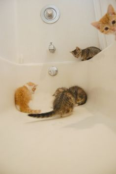 How to create chaos: fill a bathtub full of curious kittens, turn water on.