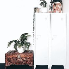 White lockers with plants
