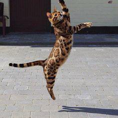 """""""Тор очень активный и дружелюбный кот"""""""