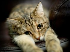 I has a sad.... cheer up little kitty, everything is going to be o.k. Love Ya!